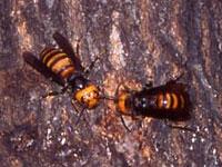 スズメバチがいるのは自然の豊かな証拠です